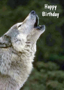 Wolf Happy Birthday Gifts On Zazzle Au