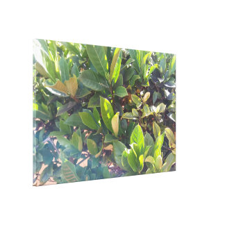 Huge Green Plant Leaves in Sunlight Canvas Print