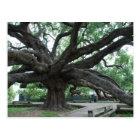 HUGE Oak Tree Jacksonville Florida Postcard