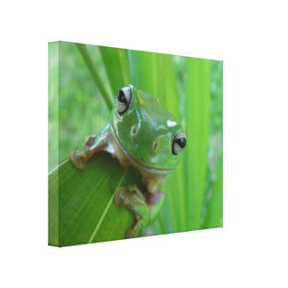 HUGE SMILING FROG PHOTO WALL ART Wrapped Canvas Gallery Wrap Canvas