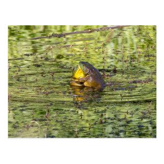 Hugging Frogs Postcard