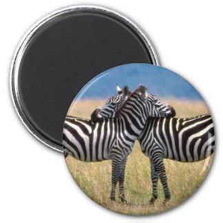 Hugging Zebras Magnet