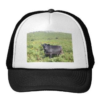 Huh Hats