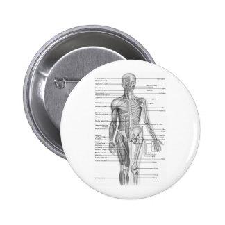 Human Anatomy Chart Button