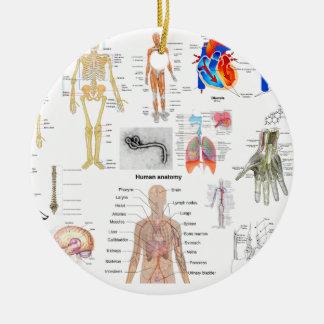 Human Anatomy Medical Diagrams full colored Ceramic Ornament