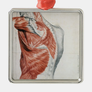 Human Anatomy; Muscles of the Torso and Shoulder Metal Ornament