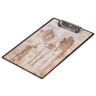 Human Anatomy Skeletons by Leonardo da Vinci Clipboard