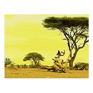 Human Birds Africa Postcard