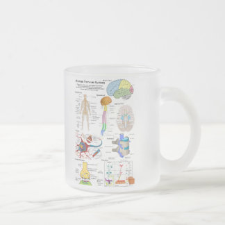 Human Brain and Central Nervous System Diagram Frosted Glass Mug