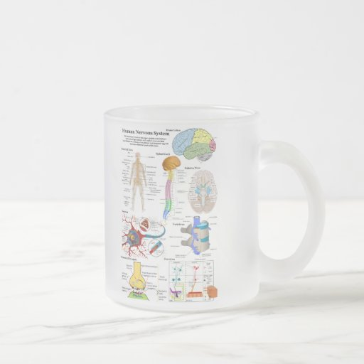 Human Brain and Central Nervous System Diagram Coffee Mug