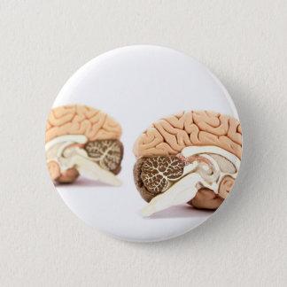 Human brains model isolated on white background 6 cm round badge