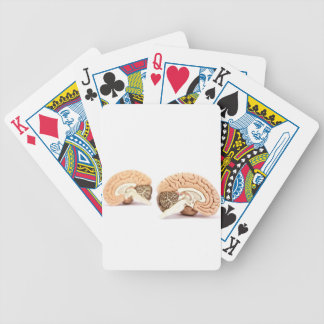 Human brains model isolated on white background bicycle playing cards