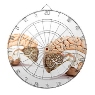 Human brains model isolated on white background dartboard