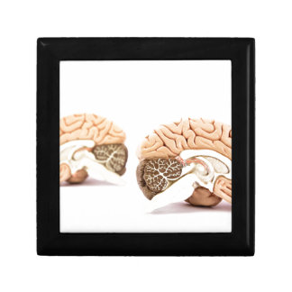Human brains model isolated on white background gift box