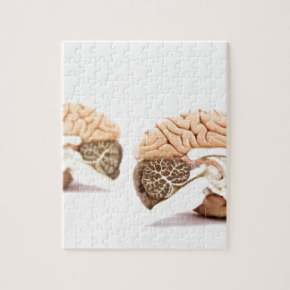 Human brains model isolated on white background jigsaw puzzle