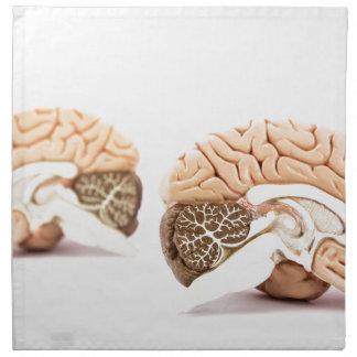 Human brains model isolated on white background napkin