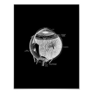 Human Eye Anatomy in Black and White print. Poster