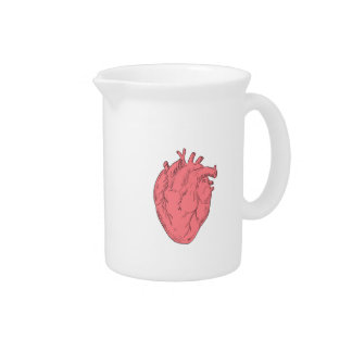 Human Heart Anatomy Drawing Pitcher