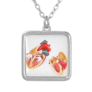 Human heart model isolated on white background silver plated necklace