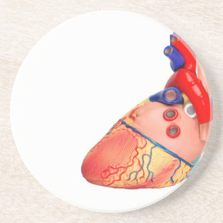 Human heart model on white background coaster