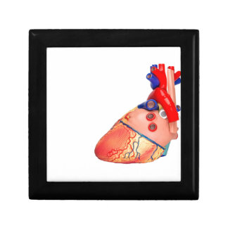 Human heart model on white background gift box