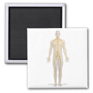 Human Nervous System 2 Magnet