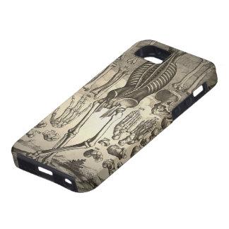 Human Skeleton ca 1741 iPhone 5 Case