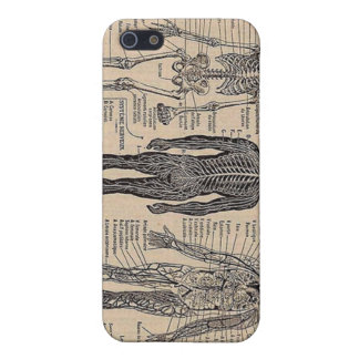 Human Skeleton Diagram iPhone Case iPhone 5/5S Cover
