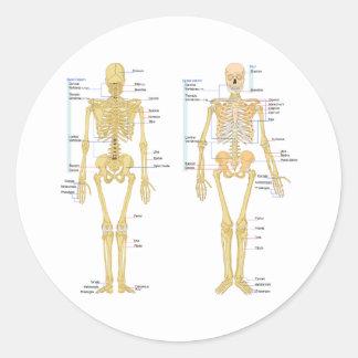 Human Skeleton labeled anatomy chart Classic Round Sticker