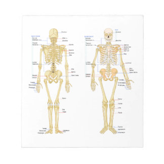 Human Skeleton labeled anatomy chart Notepads