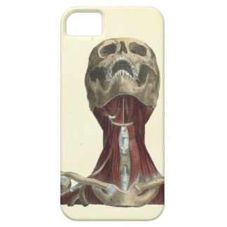 Human Skull and Neck Muscles Anatomy iPhone 5 Cases
