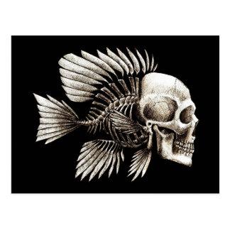 Human Skull Fish Postcard