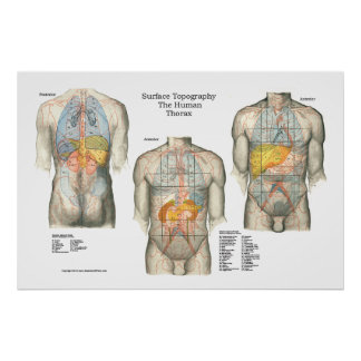 Human Surface Topography Anatomy Poster
