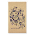 Human Vintage Anatomy Heart Old Paper Texture Pack Of Standard Business Cards