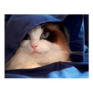Humane Society cat 2 Postcard