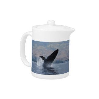 humback whale breaching
