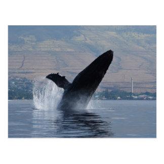humback whale breaching postcard