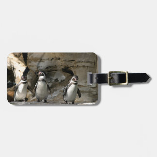 Humboldt Penguin Bag Tag