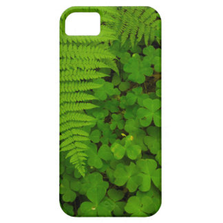 Humboldt Redwoods State Park Case For The iPhone 5