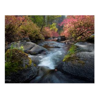 Humbug Spires Wilderness Montana Postcard