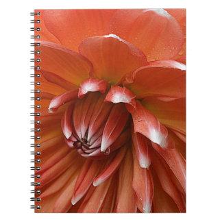 Humility Notebooks