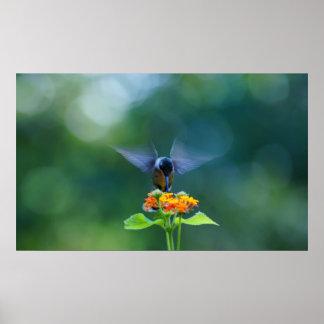 Humming Angel Wings Poster