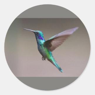 Humming Bird Classic Round Sticker, Matte Classic Round Sticker