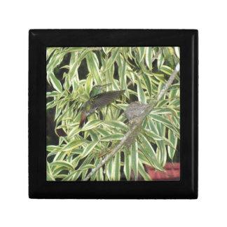 humming bird gift box