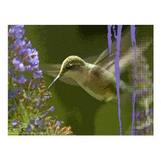Humming Bird Harmony Postcard