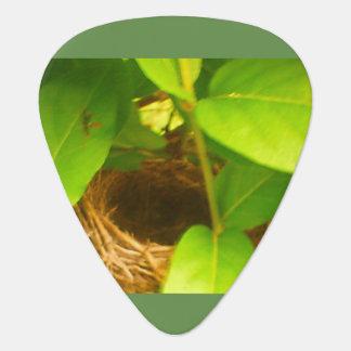 Humming Bird Nest Guitar Pick
