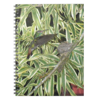 humming bird notebook