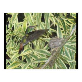 humming_bird postcard