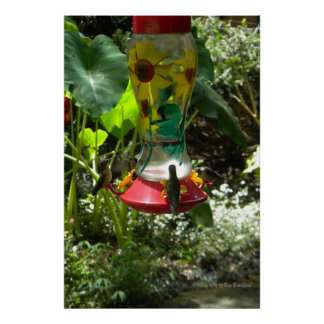 Humming Birds in the Spring Poster