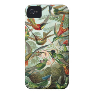 Humming birds vintage art colorful pattern, gift Case-Mate iPhone 4 cases